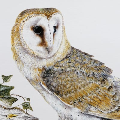 painting of a Barn Owl by Roy Aplin