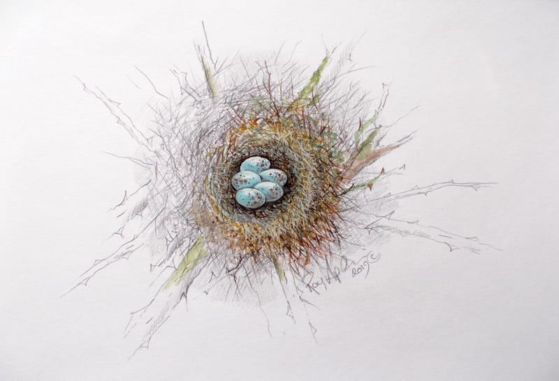 Bullfinch Nest painting by Roy Aplin