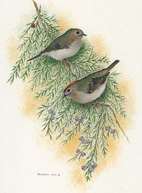 Goldcrests painting by Roy Aplin