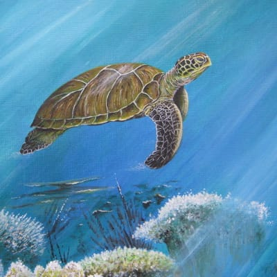 acrylic painting of a Green Turtle by Roy Aplin