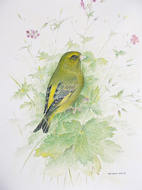 Greenfinch on Cranesbill painting by Roy Aplin