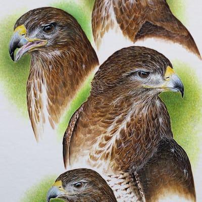 painting of four buzzard head studies by Roy Aplin