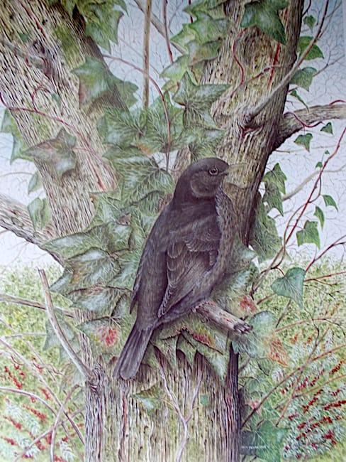 Hen Blackbird painting by Roy Aplin
