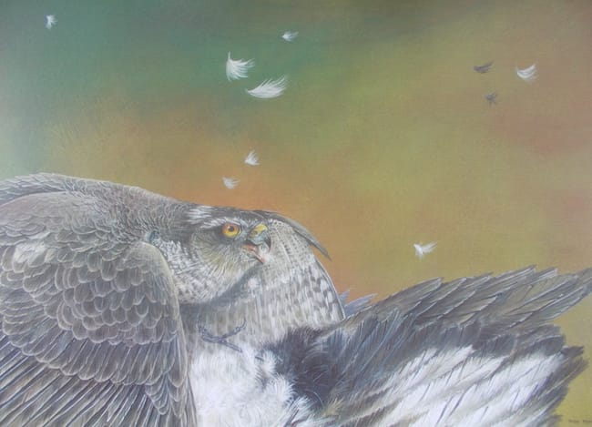 Sparrowhawk painting by Roy Aplin