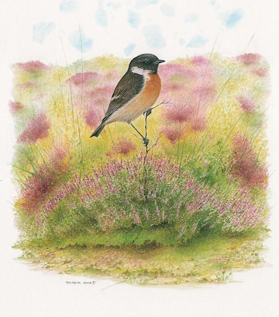 Stonechat painting by Roy Aplin