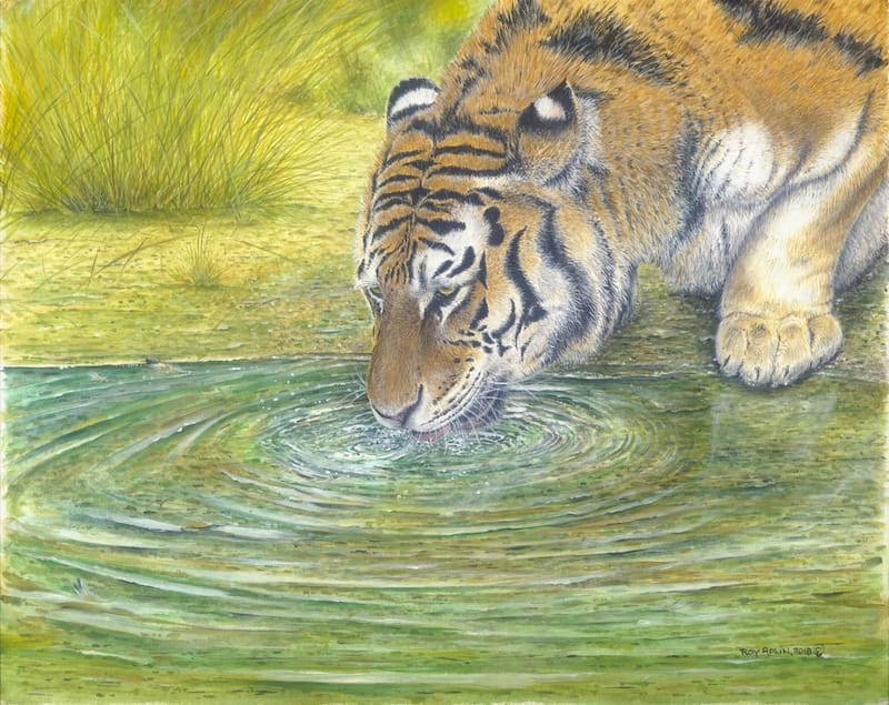 Tiger painting by Roy Aplin