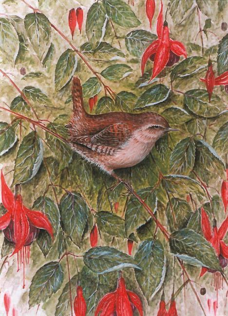 Wren on Fuchsia painting by Roy Aplin